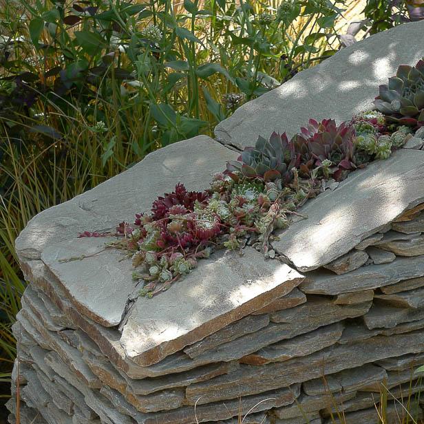 Havemur med sedum på toppen