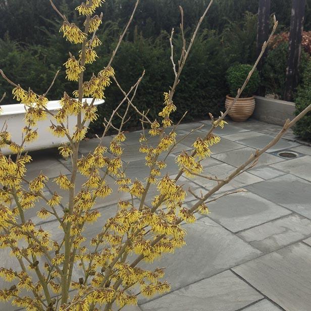 natursten sandsten Sandstone udstillingshaver Grey terrasse